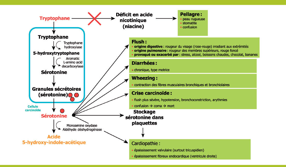cancer neuroendocrine du poumon)