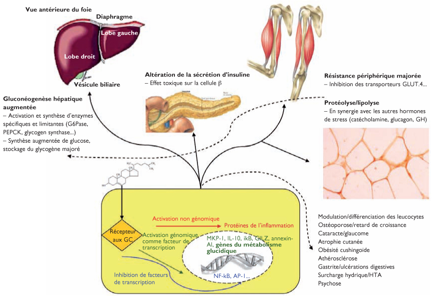 Physiopathologie du diabetes gestationnel pdf